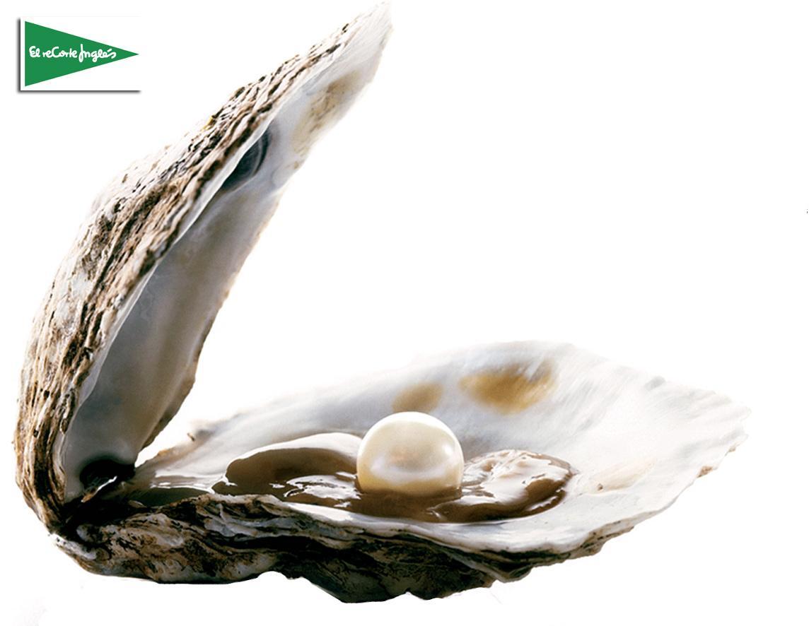 Armario Planejado Banheiro ~ Sabe como se formam as pérolas das ostras? Extras MasterChef Júnior TVI